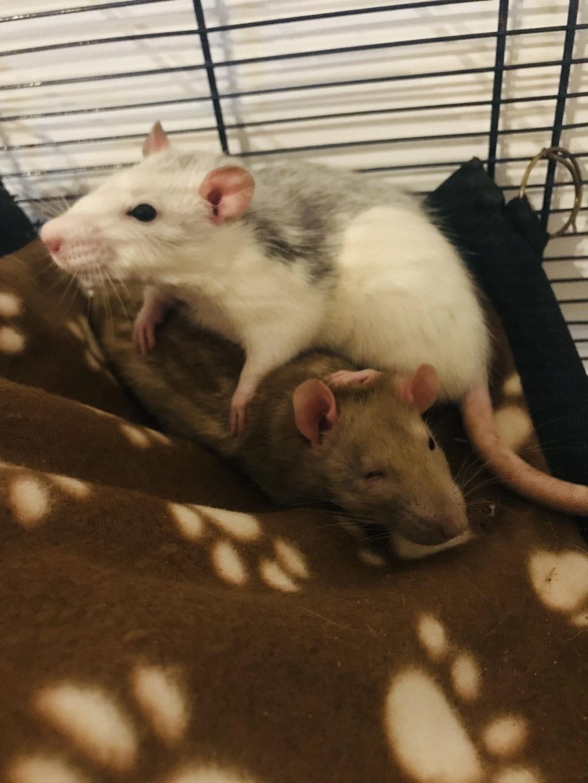 5 petits ratous Img_2910