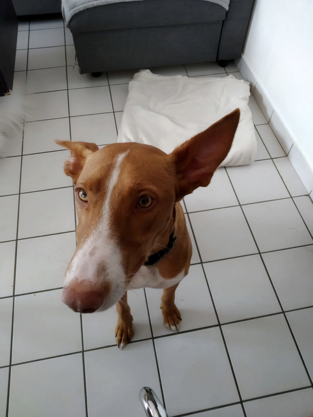 NEOO - X Podenco - Dans le 74 Img-2163