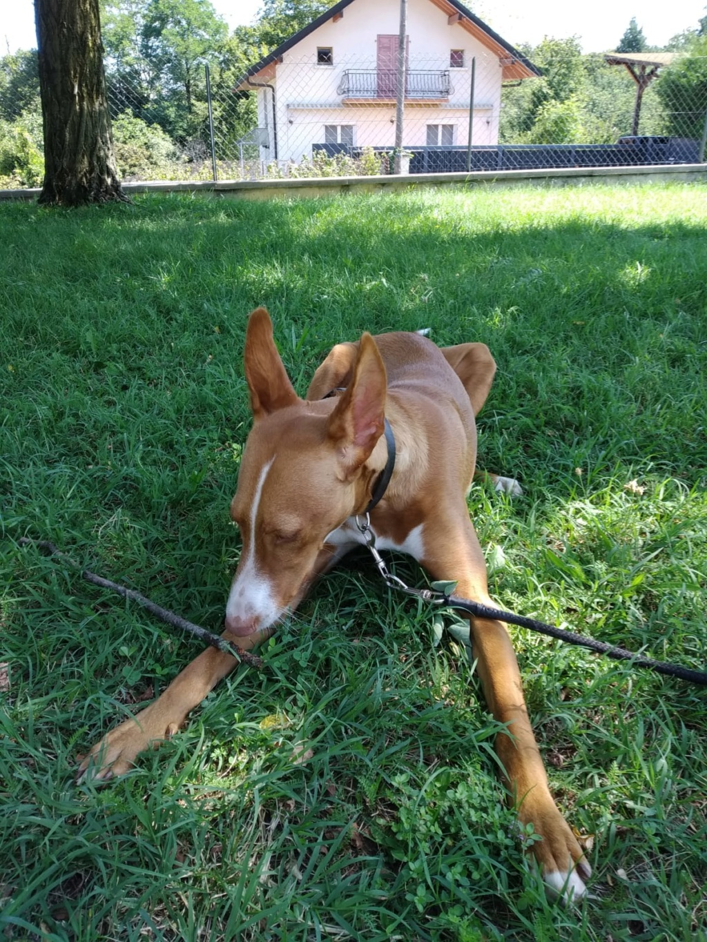 NEOO - X Podenco - Dans le 74 Img-2169