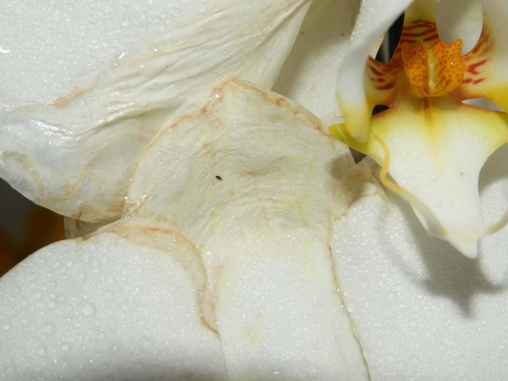 meine Orchideen brauchen Hilfe Dscn1316