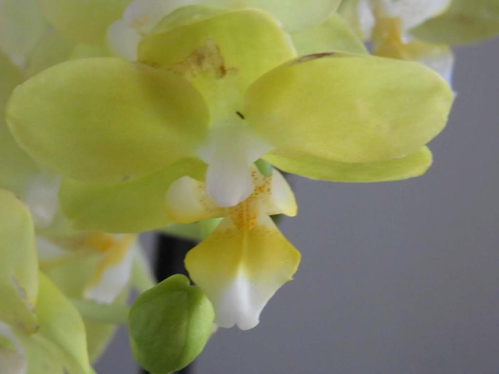 meine Orchideen brauchen Hilfe Dscn1321