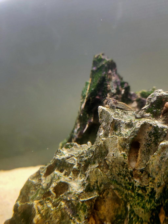 Les crevettes déclassées Img-8711