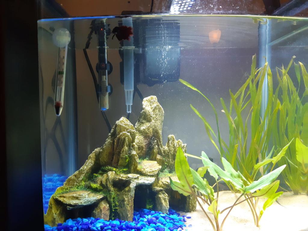 mon aquarium 20200112