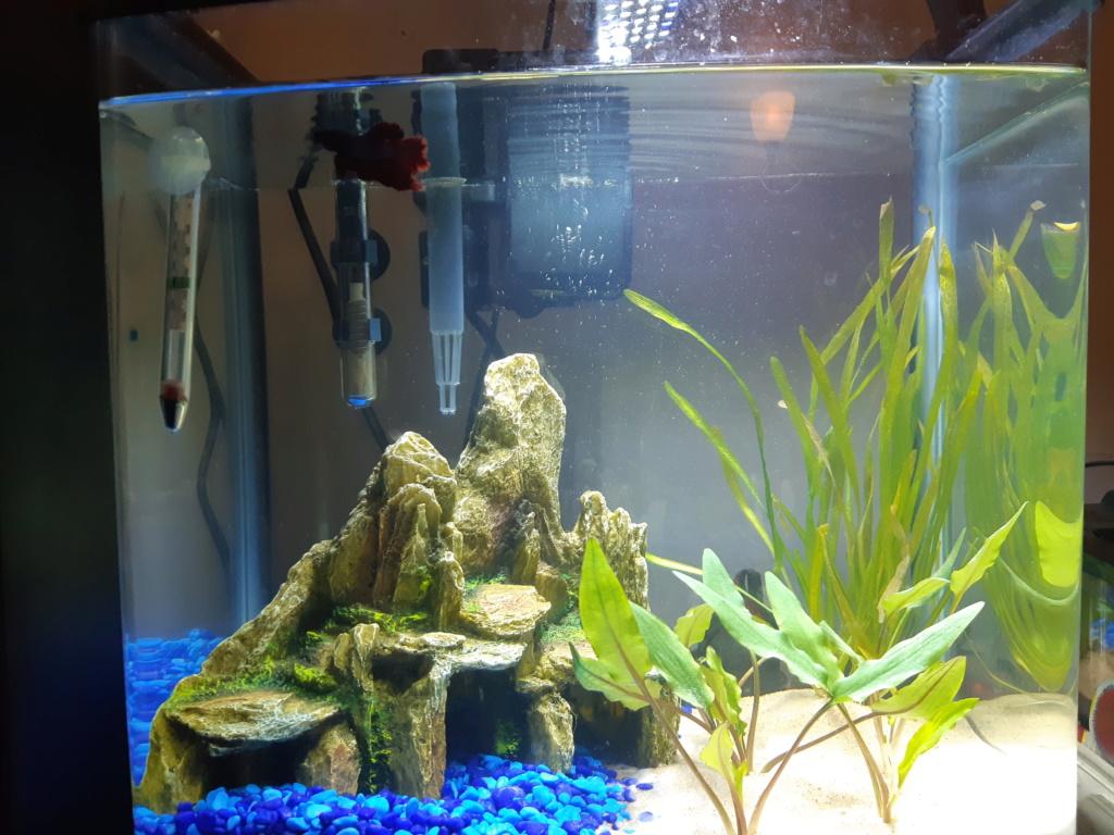mon aquarium 20200113