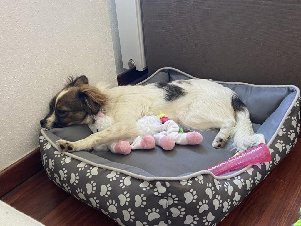 Pili- femelle- fourrière de Târgu Frumos - réservée adoption (68) 7579d210