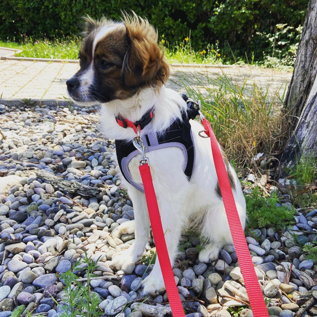 Pili- femelle- fourrière de Târgu Frumos - réservée adoption (68) 7c23e510