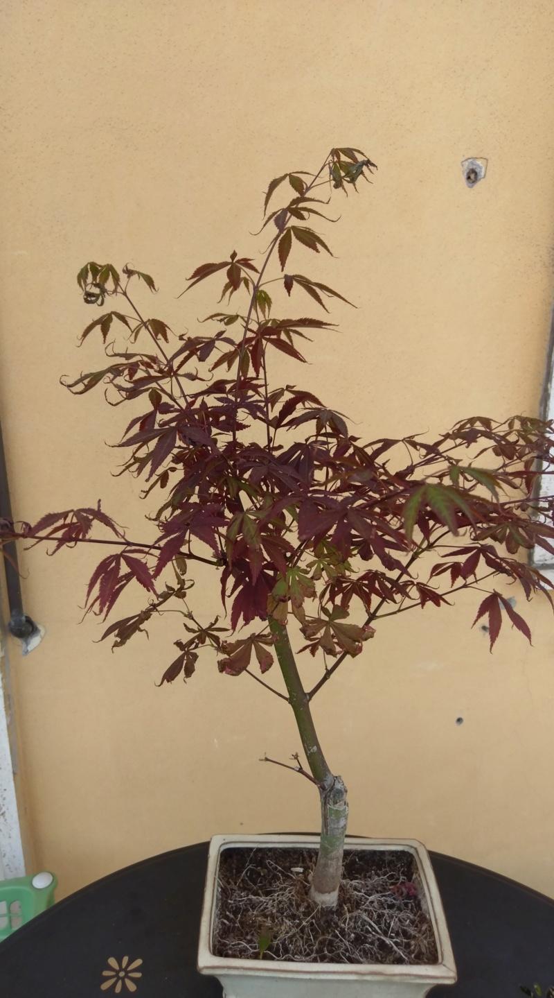 Acero Rosso, colpo di caldo e secco Imag1214