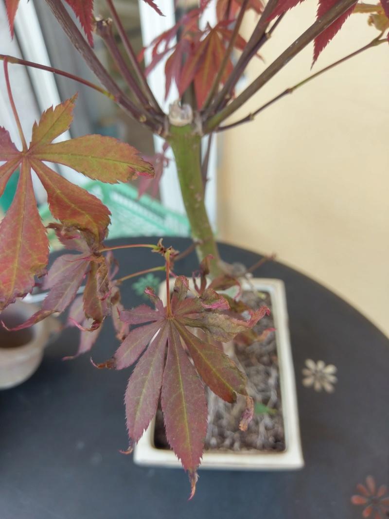 Acero Rosso, colpo di caldo e secco Imag1215