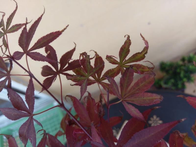 Acero Rosso, colpo di caldo e secco Imag1216