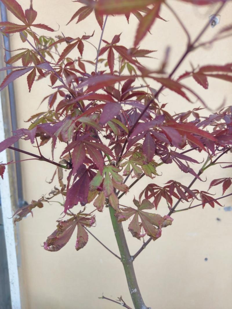 Acero Rosso, colpo di caldo e secco Imag1217