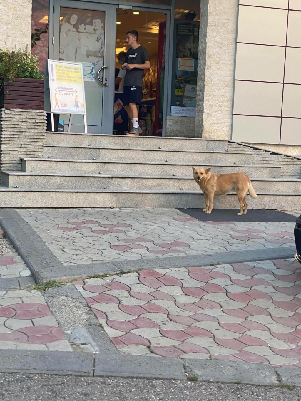 Flora- femelle- dans la rue à Târgu Frumos - réservée adoption (67) - octobre 11688210