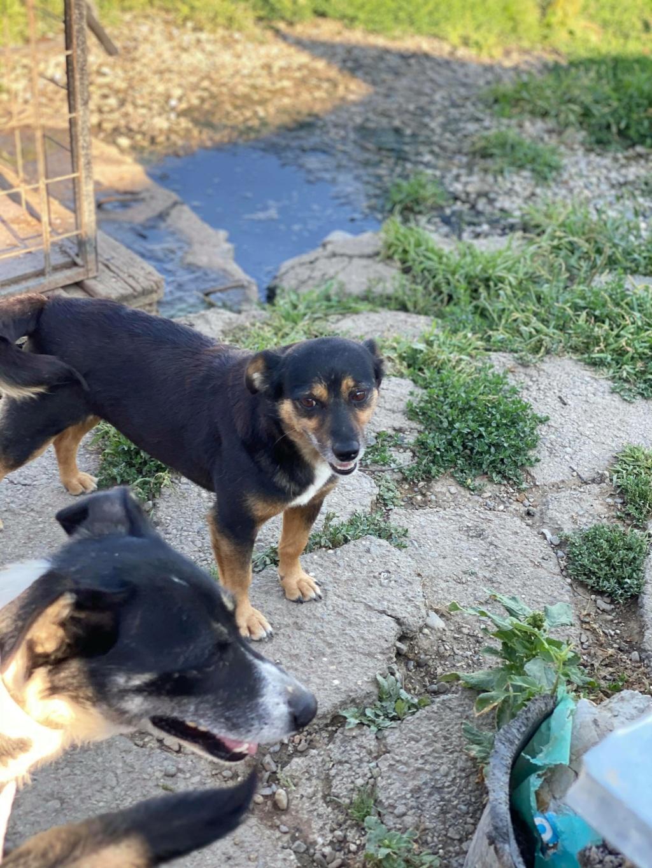 Rosea- femelle- fourrière de Târgu Frumos - adoptée via Andreea 11813110