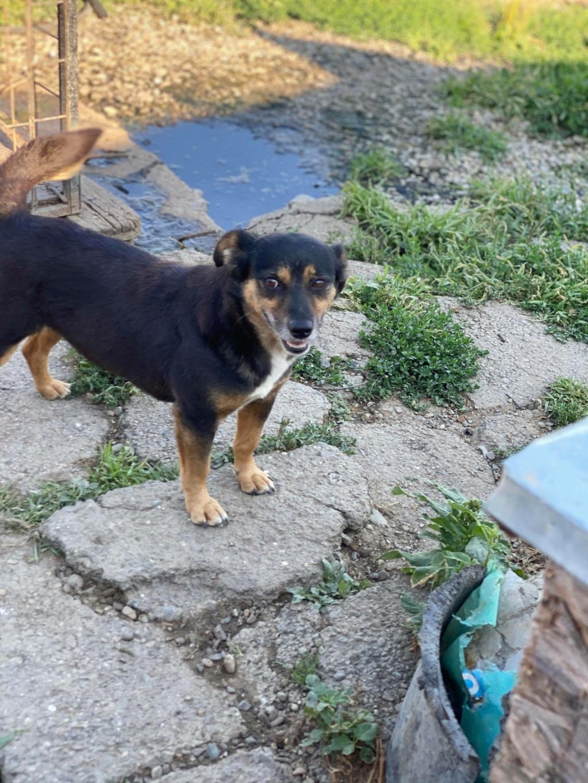 Rosea- femelle- fourrière de Târgu Frumos - adoptée via Andreea 11817510