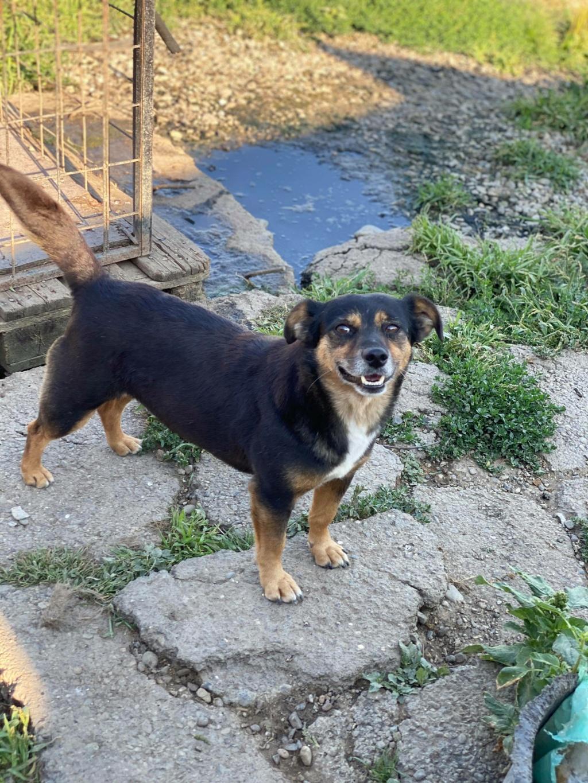 Rosea- femelle- fourrière de Târgu Frumos - adoptée via Andreea 11821110