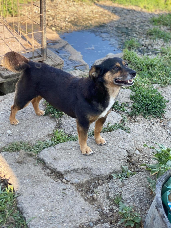 Rosea- femelle- fourrière de Târgu Frumos - adoptée via Andreea 11828610