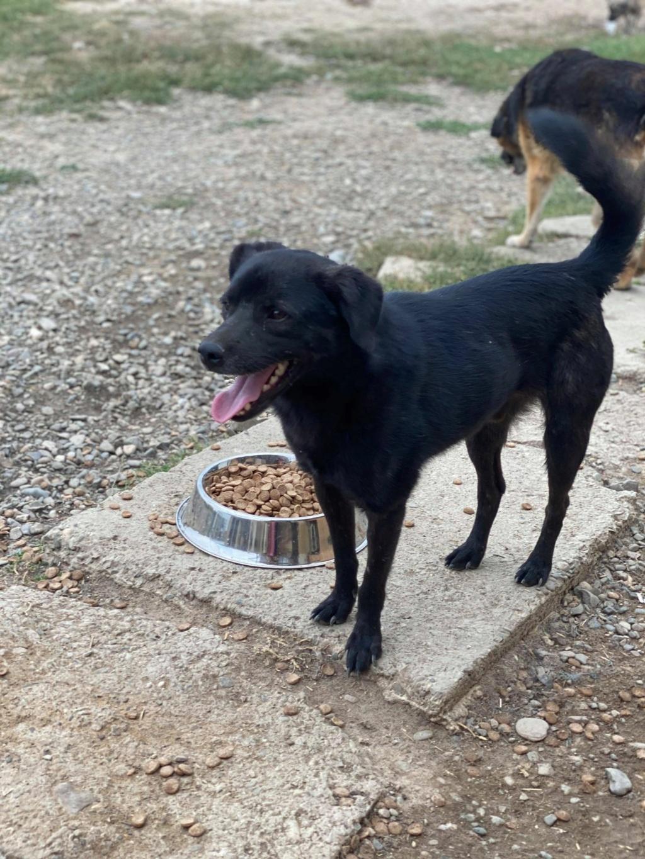 Black Onyx - mâle - fourrière de Târgu Frumos 12021810