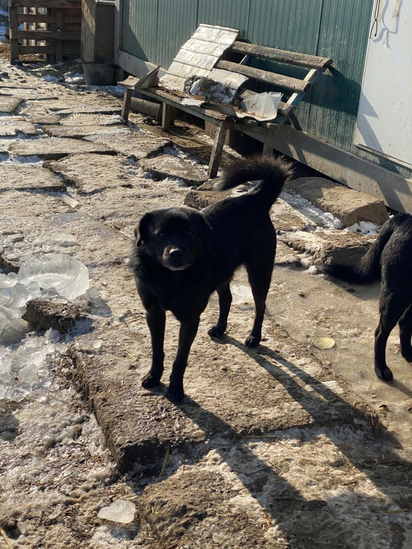 Black Onyx - mâle - fourrière de Târgu Frumos 14074210