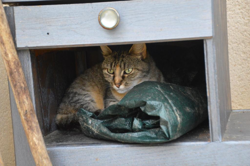 Bamcar cats Dsc_0010