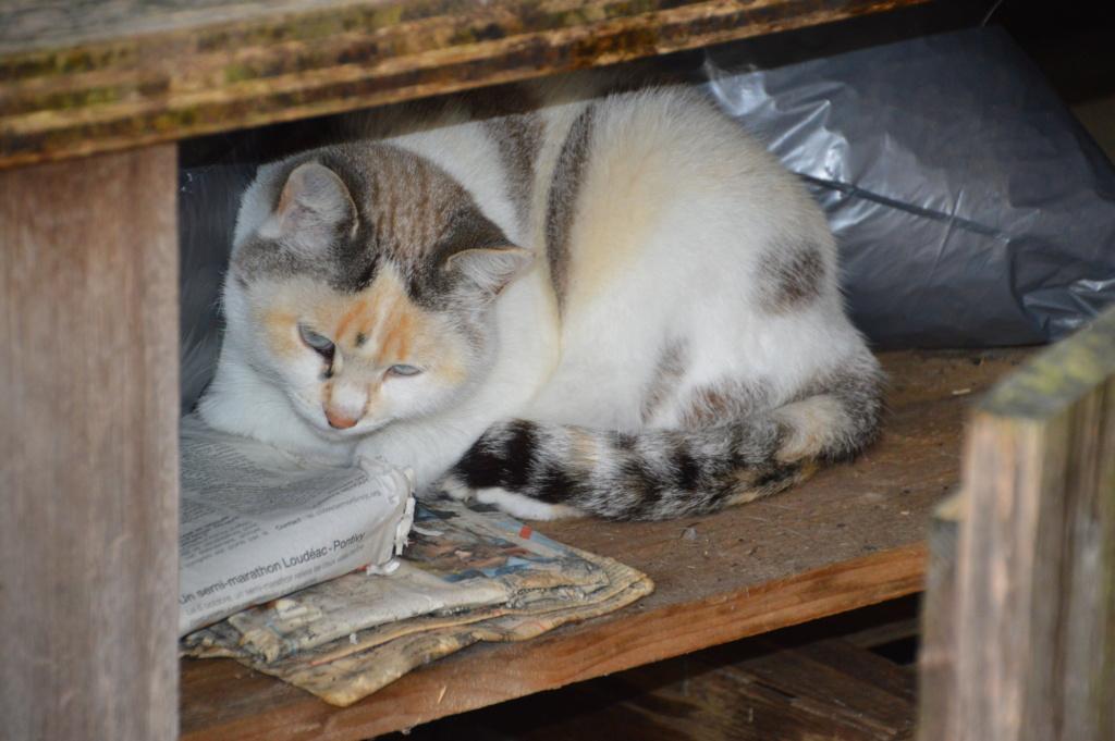 Bamcar cats Dsc_0011