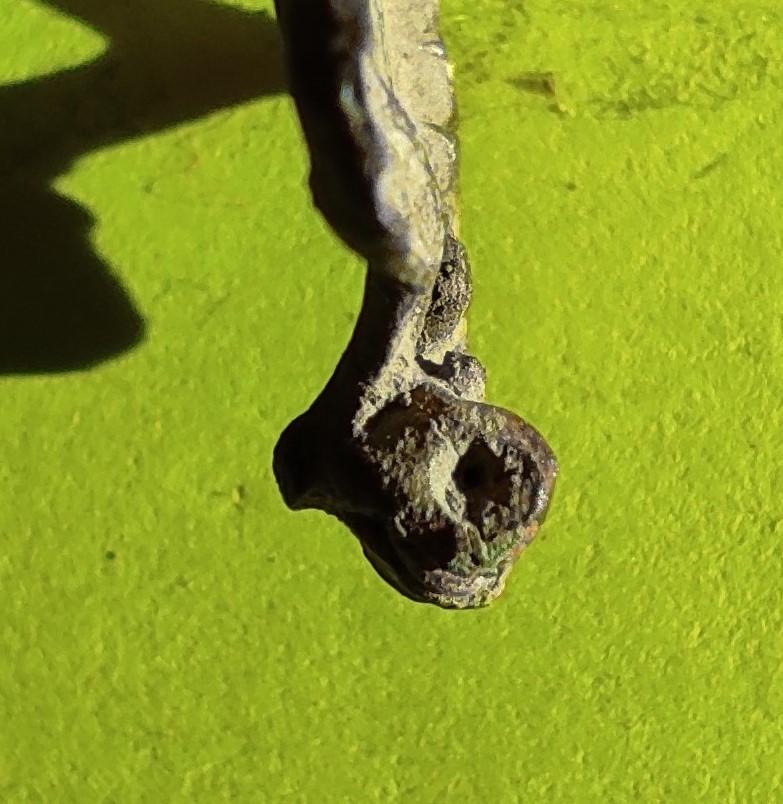 """Probablement petite broche ancienne, type """"héraldique"""", fin XVIIe - début XVIIIe Cotzo_10"""