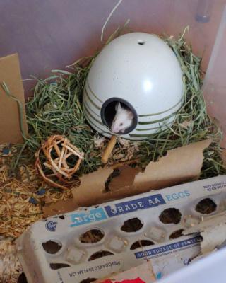 Egg Home! 20210510
