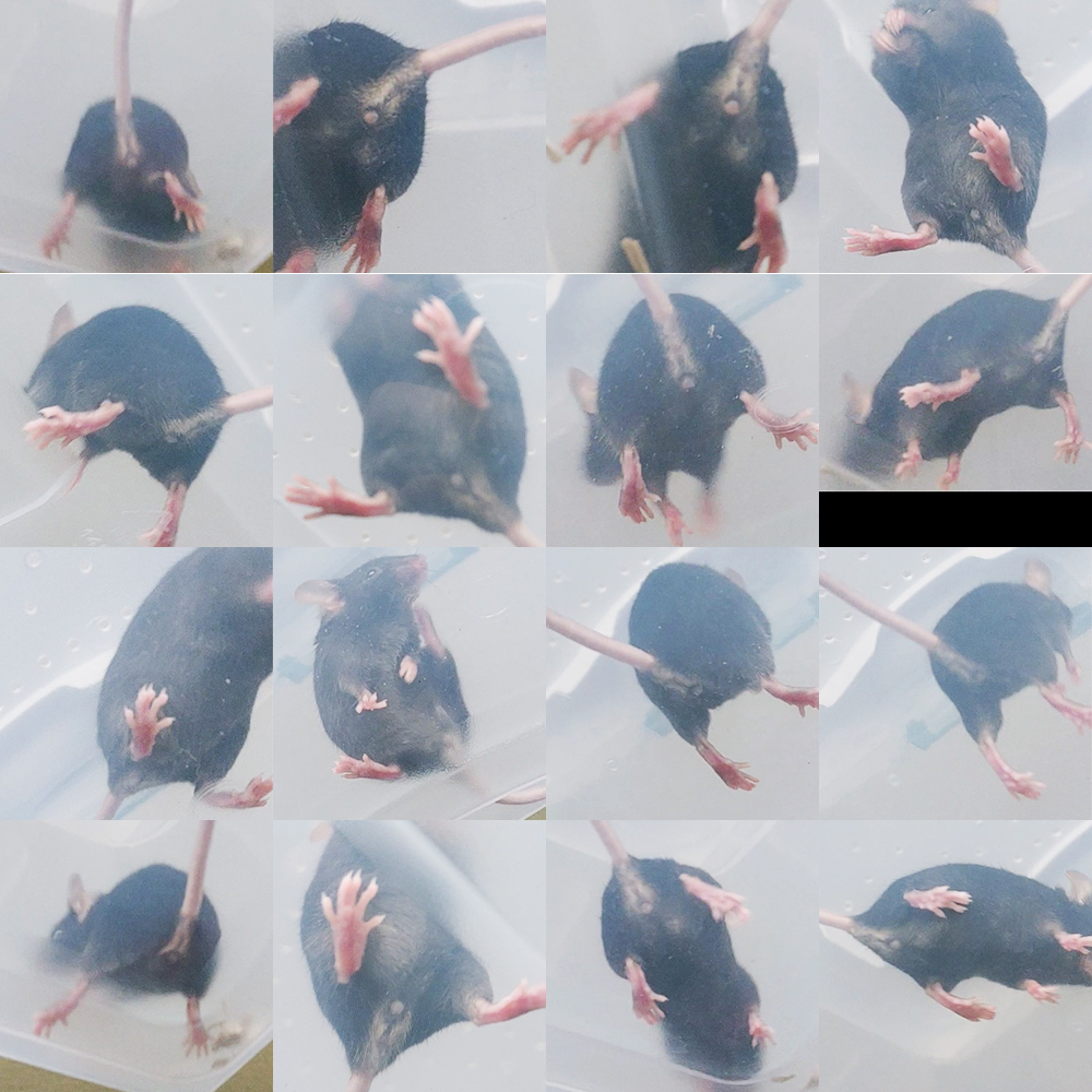 Mice Introduction Gone Wrong. How to progress from here? + Behavior Q's Sesame10