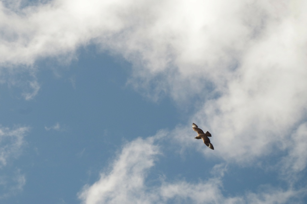 Fórum Aves - Birdwatching em Portugal - Portal Imgp0110