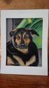Portraits de vos animaux aux pastels - Page 2 Poub18