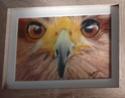 Portraits de vos animaux aux pastels Sans_t13