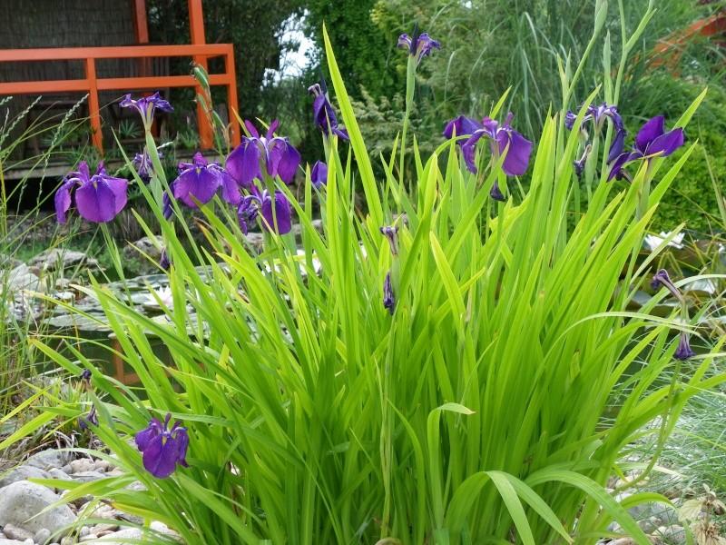 Les Rendez-vous Au Jardin le 5, 6 et 7 juin 2009 Imgp0130