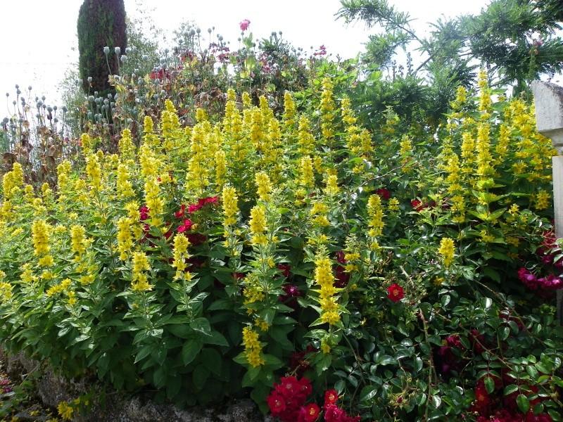 Les Rendez-vous Au Jardin le 5, 6 et 7 juin 2009 Imgp0149