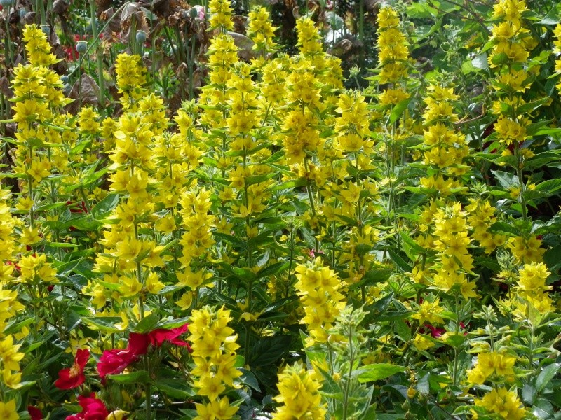 Les Rendez-vous Au Jardin le 5, 6 et 7 juin 2009 Imgp0150