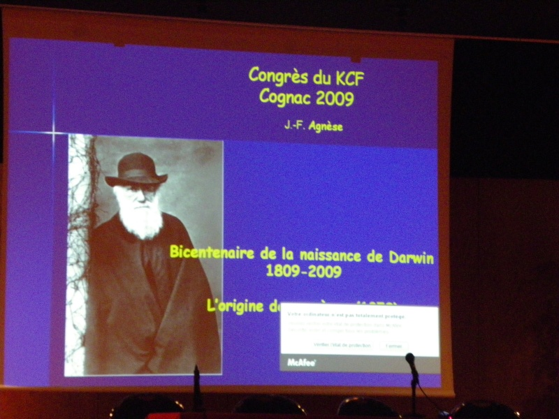 Congrès KCF (Killi club France) 2 au 4 oct 09 Cognac dep 16 Imgp2659