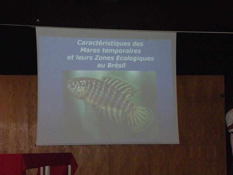 Congrès KCF (Killi club France) 2 au 4 oct 09 Cognac dep 16 Imgp2661