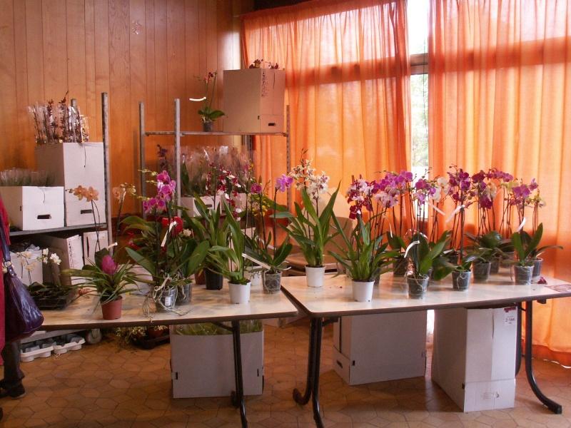 Salon du bassin et du jardin 18 et 19 avril 2009 St Vaize près de Saintes Pict0204