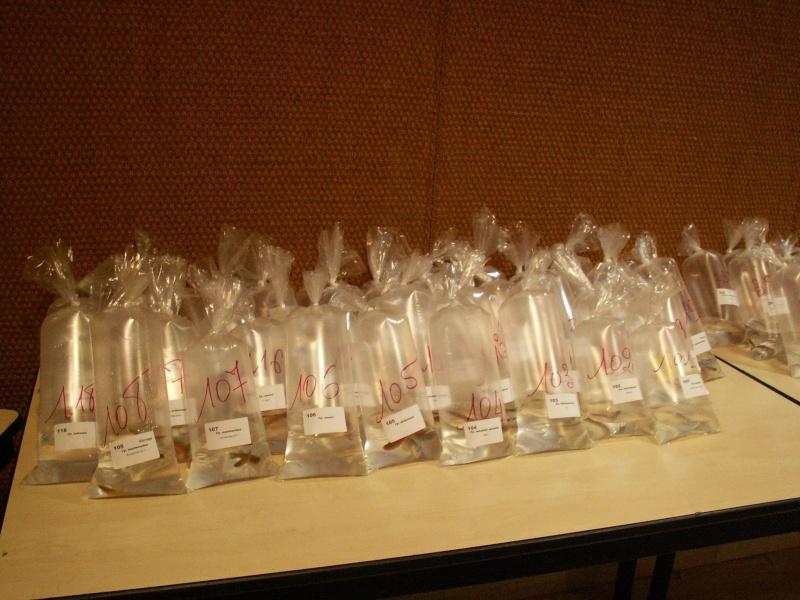 Congrès KCF (Killi club France) 2 au 4 oct 09 Cognac dep 16 Pict0520