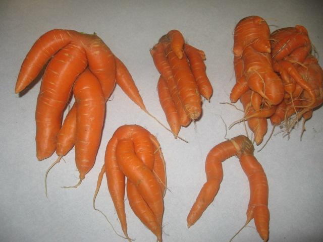 carottes bizares 01910