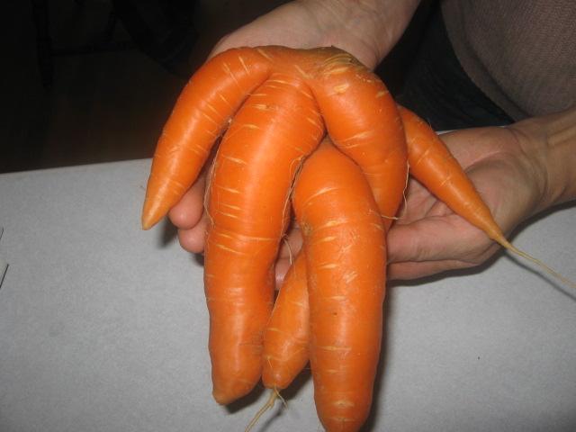 carottes bizares 02010