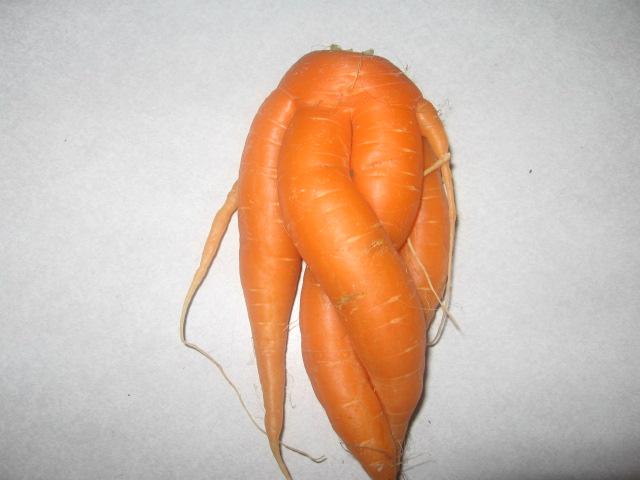 carottes bizares 02110