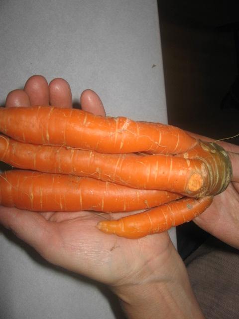 carottes bizares 02210
