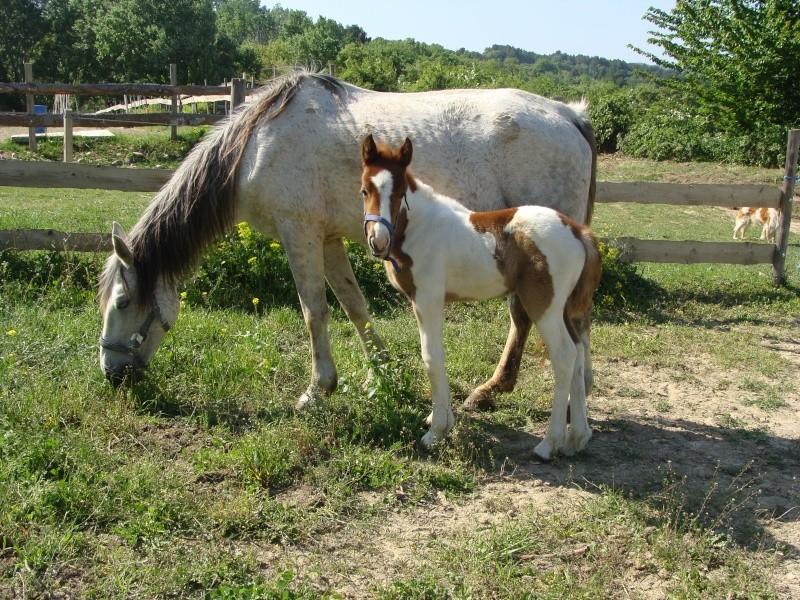 4 CB... Valkyrie, 1er bébé à lucky farm Dsc01225