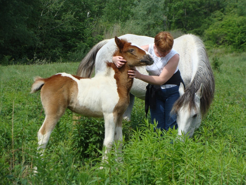 4 CB... Valkyrie, 1er bébé à lucky farm Dsc01410