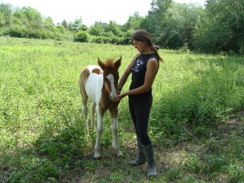 4 CB... Valkyrie, 1er bébé à lucky farm Dsc01412