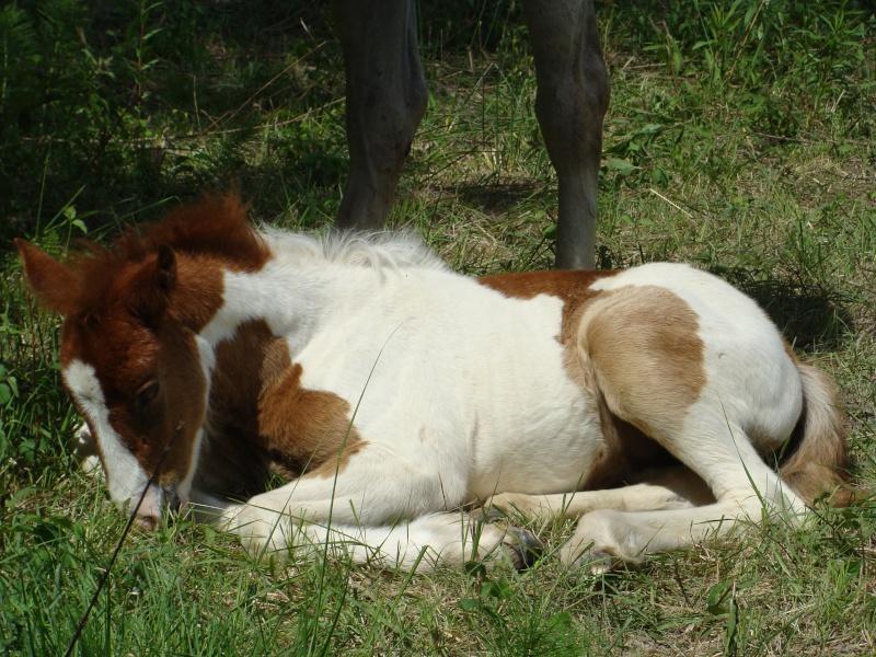 4 CB... Valkyrie, 1er bébé à lucky farm Dsc01414