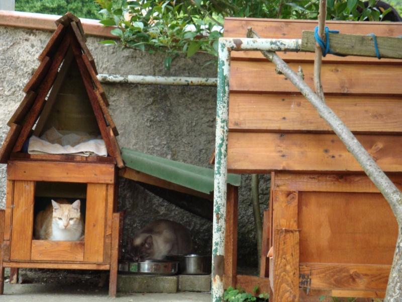 Visite guidée de la Maison des Chats Dsc00317