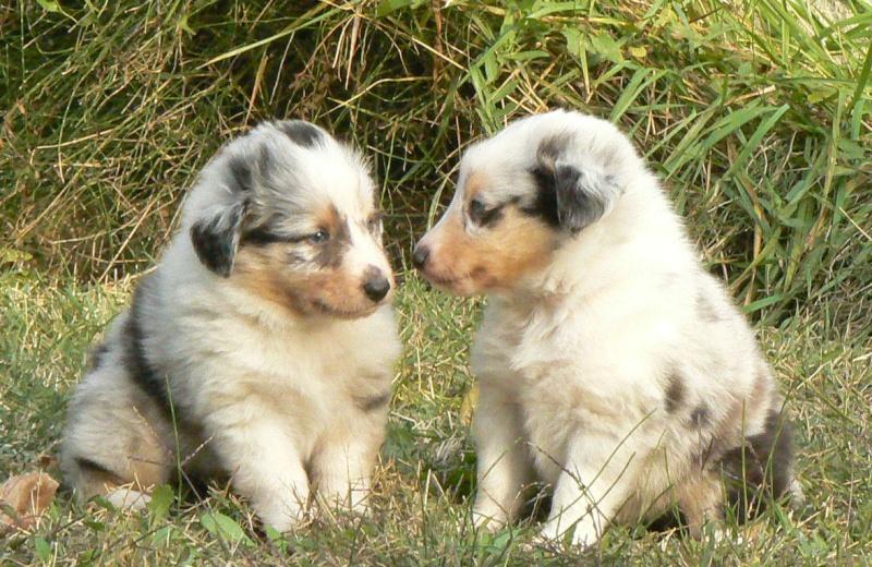 2 Bébés bleus à vendre ( ne sont plus disponible ) Image415