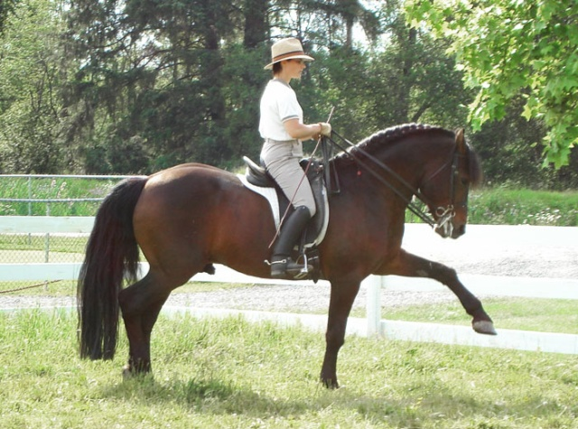 presentation de chevaux canadiens Hasard12