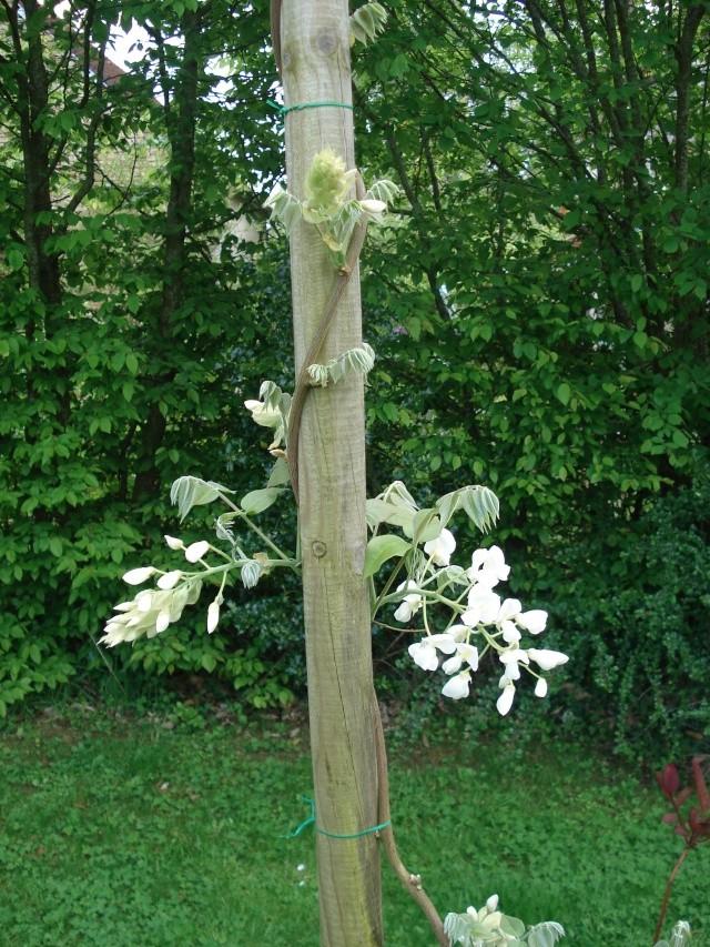 vlà le printemps chez Michelle - Page 3 511_1046
