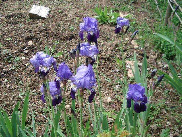 vlà le printemps chez Michelle - Page 3 511_1077