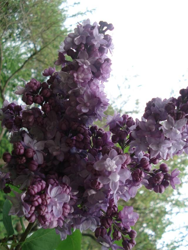 vlà le printemps chez Michelle - Page 3 511_1079